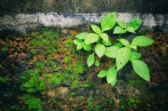 Plant growing out of a crevice in a brick wall