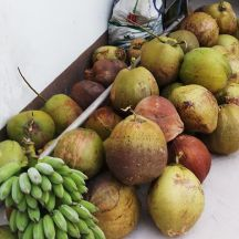 Some of the coconuts.