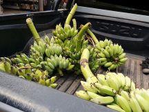 Truckload of bananas