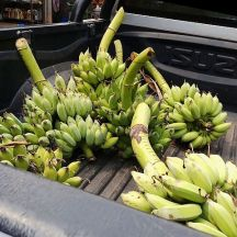 Truckload of bananas